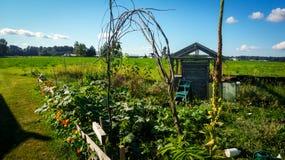 Jardin avec la serre chaude et la barrière en bois photographie stock libre de droits