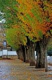Jardin avec les arbres alignés Photo stock