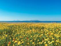 Jardin avec les fleurs jaunes Image libre de droits