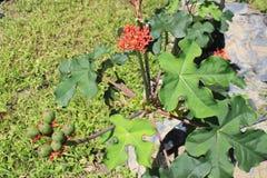 Jardin avec les fleurs rouges Photo libre de droits