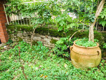 Jardin avec les fleurs vertes Photos libres de droits