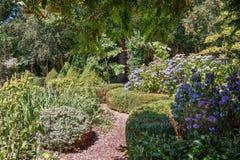 Jardin avec les hortensias bleus de floraison Photo stock