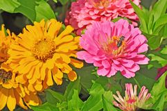 Jardin avec magnifique multicolore Photos stock