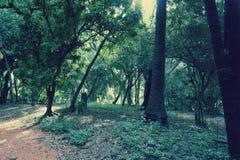Jardin botanico卡洛斯Thays 库存照片