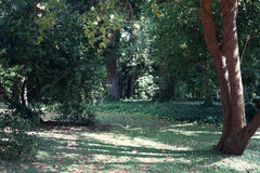 Jardin botanico Carlos Thays fotografia royalty free