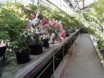 Jardin botanique à Moscou photographie stock libre de droits