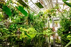 Jardin botanique images libres de droits