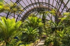 Jardin botanique photos libres de droits