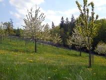 Jardin botanique dans l'awice de 'de WojsÅ d'arborétum photo stock