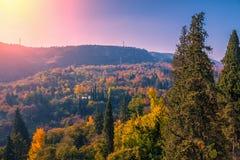 Jardin botanique dans la ville de Tbilisi Image libre de droits