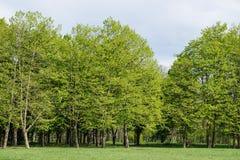 Jardin botanique de Kuban Images libres de droits