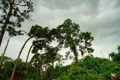 Jardin botanique de largo de la Floride Images libres de droits