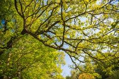 Jardin botanique de Meise Image libre de droits
