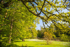 Jardin botanique de Meise Image stock