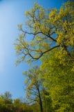 Jardin botanique de Meise Photographie stock libre de droits