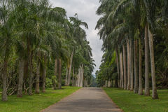 Jardin botanique de Peradeniya Photographie stock