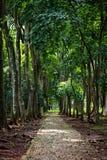 Jardin botanique de Purwodadi, Pasuruan, Indonésie photographie stock libre de droits
