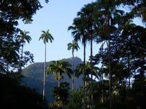 Jardin botanique de Rio de Janeiro photos stock