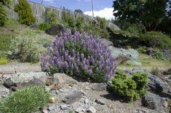 Jardin botanique de Vancouver à l'université de la Colombie-Britannique Photographie stock