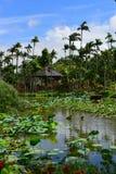 Jardin botanique du sud-est dans l'Okinawa Image stock