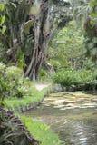 Jardin botanique en Rio de Janeiro, Brésil photo libre de droits