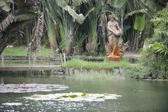 Jardin botanique en Rio de Janeiro, Brésil image libre de droits