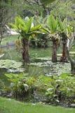 Jardin botanique en Rio de Janeiro, Brésil images stock