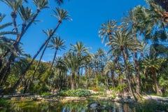 Jardin botanique Huerto del Cura à Elx photographie stock libre de droits