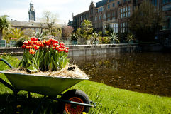 Jardin botanique - Leyde - Pays-Bas Photographie stock libre de droits