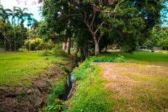Jardin botanique Pamplemousses, Îles Maurice photos stock