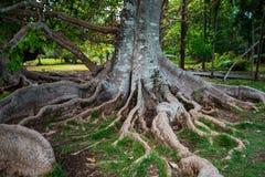 Jardin botanique Pamplemousses, Îles Maurice photos libres de droits