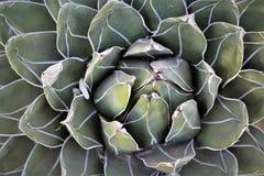 Jardin botanique Phoenix Arizona de désert images stock