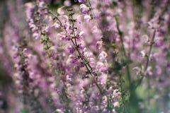 Jardin botanique, plan, fond, beau, fleur, couleur, champ, flore, fleur, nature, ressort, été, été, images stock