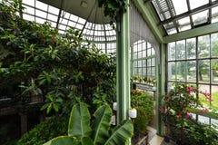 Jardin botanique, serre chaude, Kretinga, Lithuanie photos libres de droits