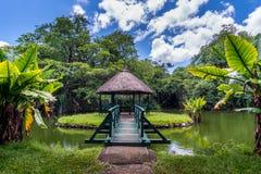 Jardin botanique sur l'île des Îles Maurice images libres de droits
