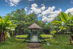 Jardin botanique sur l'île des Îles Maurice image stock