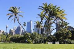Jardin botanique Sydney de palmier photos stock