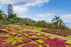 Jardin botanique tropical à Funchal, île de la Madère, Portugal Images libres de droits