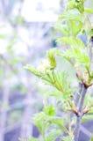 jardin Bush vert Photos stock