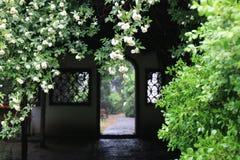 Jardin chinois Image stock