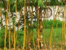 Jardin chinois avec le bambou image stock