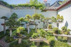 Jardin chinois de bonsaïs Photo stock