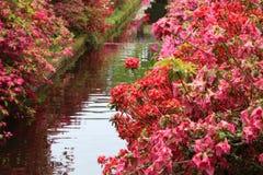 Jardin coloré avec une crique Photo stock