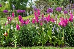 Jardin coloré de ressort avec les fleurs de magenda, pourpres et violettes Photos stock