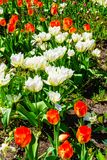 Jardin complètement de belles fleurs photos libres de droits