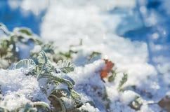 Jardin couvert de neige en hiver Image stock