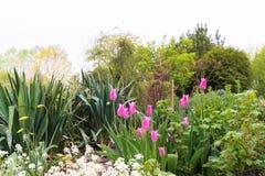 Jardin décoratif de famille avec les tulipes roses lumineuses photos stock