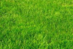 Jardin décoratif vert Paysage neutre avec un champ vert Arbre du paysage Park images stock