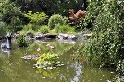 Jardin d'étang Photo stock