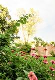 Jardin d'agrément avec des zinnias multicolores et avec le mur et les arbres grands à l'arrière-plan - foyer sélectif Photo libre de droits